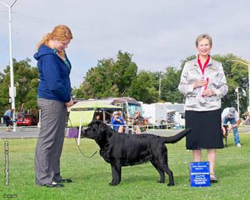 Deep Peninsula Dog Training Club